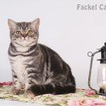 Amur-Fackel-BSH-as2264-1