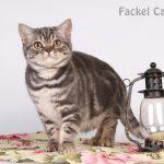 Amur-Fackel-BSH-as2264